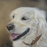Portrait Animalier : un Chien Adorable !