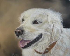 peinture-pastel-portrait-chien-animaux