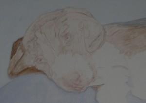 beagle-1ère étape