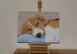 portos-beagle-portrait-salomee.fr