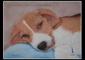 portrait-beagle-portos-salomee.fr