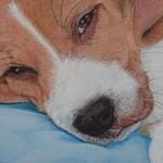 Un Beagle qui s'appelait Portos…