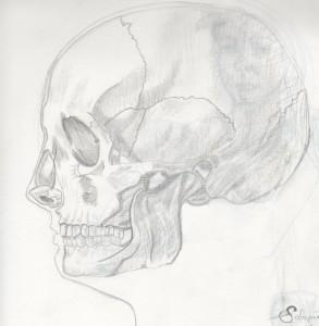 crâne-humain-croquis-graphite